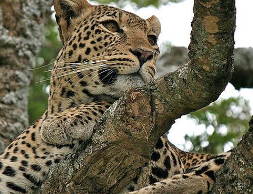 La belleza hecha animal